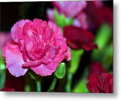 Pretty In Pink Metal Print by Sandi OReilly