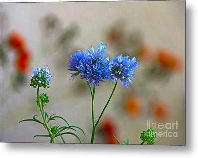 Pretty Weeds Metal Print by Byron Varvarigos