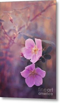 Prickly Rose Metal Print by Priska Wettstein