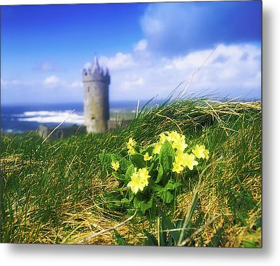Primrose Flower In Foreground Metal Print by The Irish Image Collection