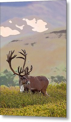 Profile Of A Bull Caribou- Abstract Metal Print by Tim Grams