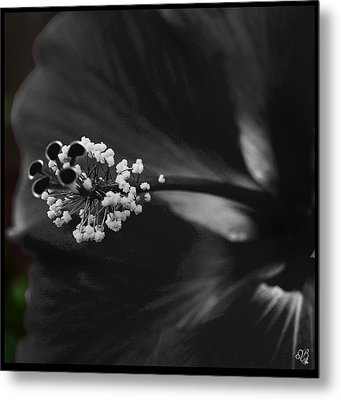 Projection In Black And Whiite Metal Print by Barbara Middleton