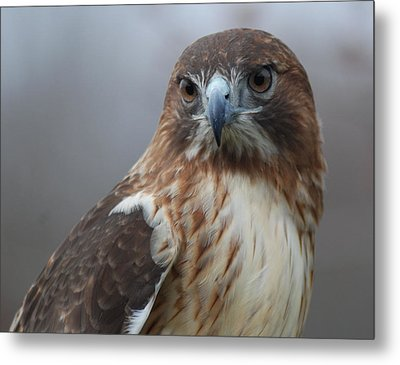 Proud Prince Of The Skies Metal Print by Richard Bryce and Family