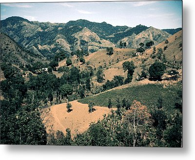 Puerto Rico. Forest And Clear Cut Metal Print by Everett