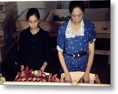 Puerto Rico. Women Sorting And Packing Metal Print by Everett