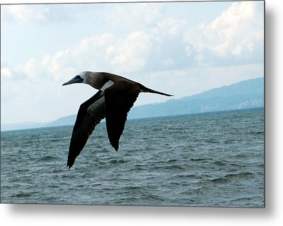 Puerto Vallarta - A Bird In Flight  Metal Print