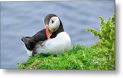 Metal Print featuring the photograph Puffin by Lynn Bolt