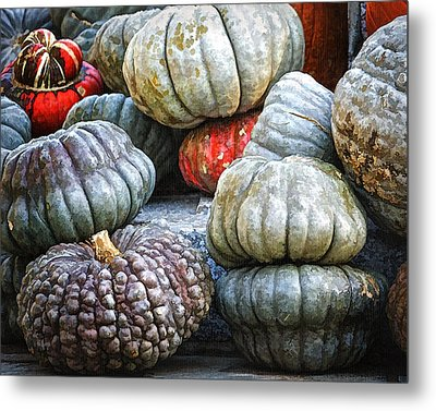 Pumpkin Pile II Metal Print by Joan Carroll