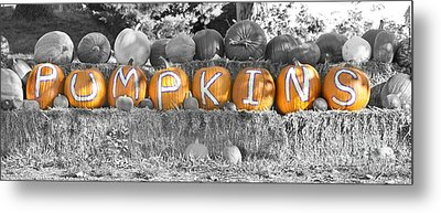 Pumpkins P U M P K I N S Bwsc Metal Print by James BO  Insogna