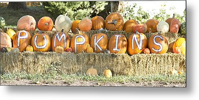 Pumpkins P U M P K I N S Metal Print by James BO  Insogna