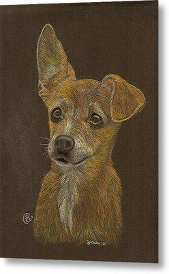 Pup Metal Print by Stephanie L Carr