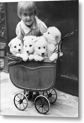 Puppies In A Pram Metal Print by Fox Photos