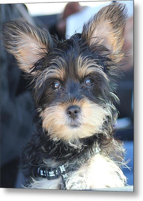Puppy Eyes Metal Print