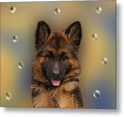 Puppy With Bubbles Metal Print by Sandy Keeton