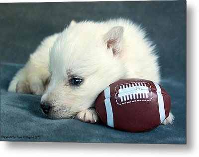 Puppy With Football Metal Print
