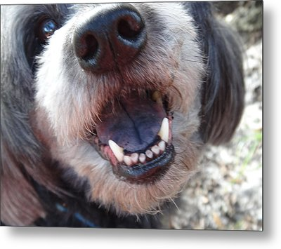 Metal Print featuring the photograph Puppyface by Ginny Schmidt
