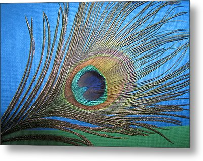 Purdy As A Peacock Metal Print by Kathy Clark