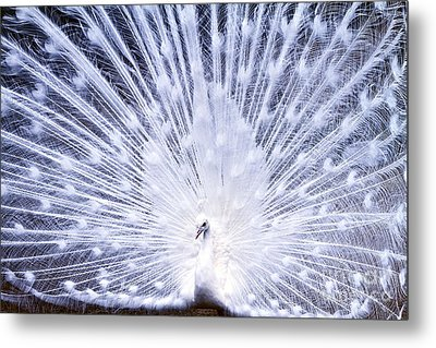 Pure Metal Print by Eric Chapman