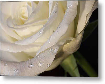Purity Metal Print by Shirley Mitchell