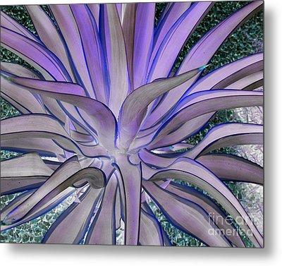 Purple Aloe Metal Print by Rebecca Margraf