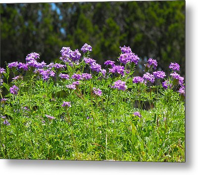 Purple And Green Metal Print by Rebecca Cearley