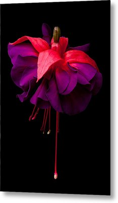 Purple And Pink Beauty Metal Print by Dawn OConnor
