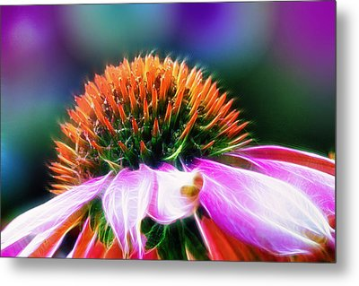 Purple Coneflower Delight Metal Print