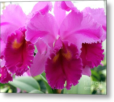 Metal Print featuring the photograph Purple Explosion by Debbie Hart