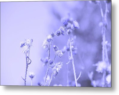 Purple Field Metal Print