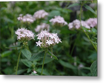 Metal Print featuring the photograph Purple Flower by Jennifer Ancker