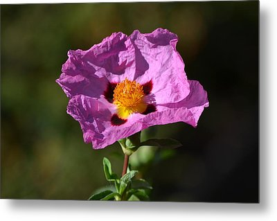 Metal Print featuring the photograph Purple Flower by Rima Biswas
