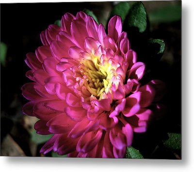 Purple Flower Metal Print by Sumit Mehndiratta