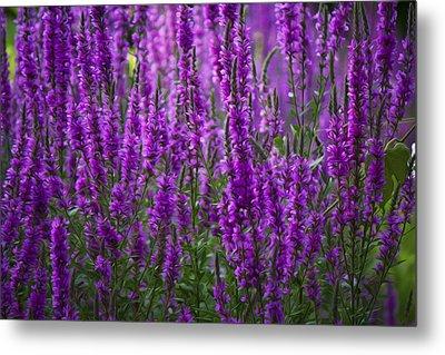 Purple Flowers Metal Print by Michel DesRoches