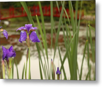 Metal Print featuring the photograph Purple Iris by Coby Cooper