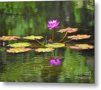 Metal Print featuring the photograph Purple Lily Pad by Eve Spring