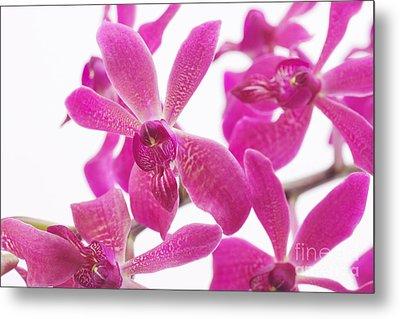 Purple Orchid Metal Print by Atiketta Sangasaeng