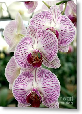 Metal Print featuring the photograph Purple Orchids by Debbie Hart