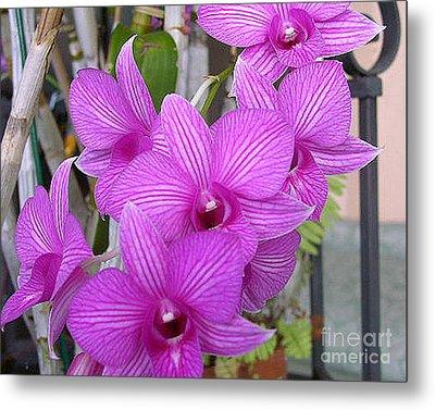 Purple Orchids Metal Print by Merton Allen