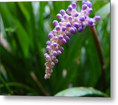 Purple Paradise Metal Print by Chad and Stacey Hall