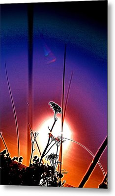 Purple Sprout Metal Print by Darren Cole Butcher