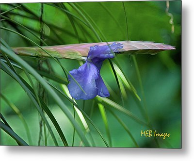 Purple Wonder Metal Print by Margaret Buchanan
