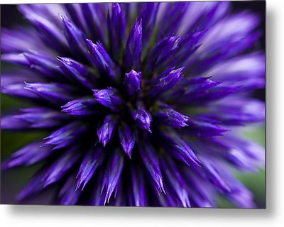 Metal Print featuring the photograph Purple Zoom by Trevor Chriss