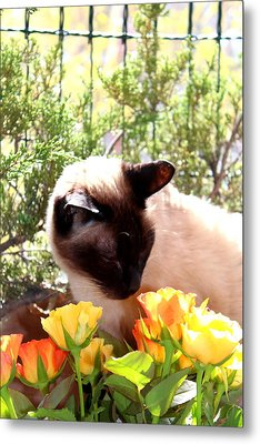 Purrfect Scent Metal Print by Sonja Bonitto