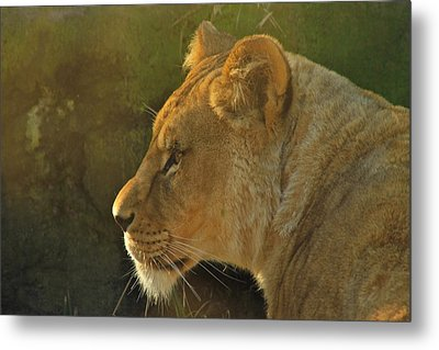Pursuit Of Pride Metal Print by Laddie Halupa