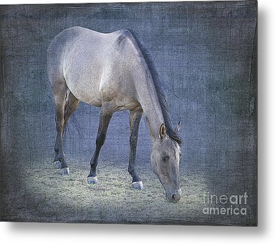 Quarter Horse In Blue Metal Print by Betty LaRue