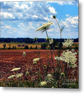 Queen Annes Lace And Hay Bales Metal Print by Julie Dant
