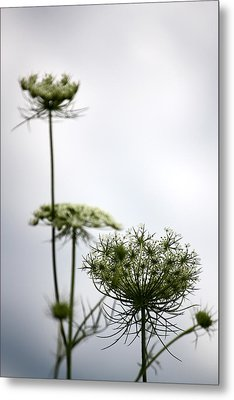 Metal Print featuring the photograph Queen Annes Lace by Penny Hunt