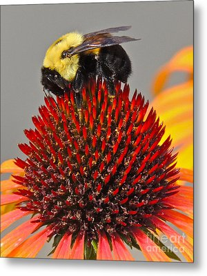 Queen Bee Metal Print by Eve Spring
