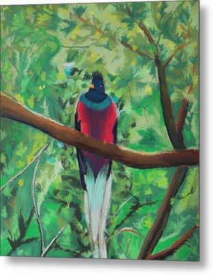Quetzal In Costa Rica Metal Print