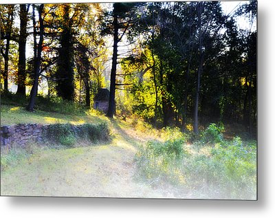 Quiet Morning In The Woods Metal Print by Bill Cannon